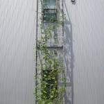緑のカーテン全体